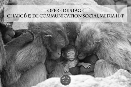 Mad Monkeys recrute: Offre de stage conventionné