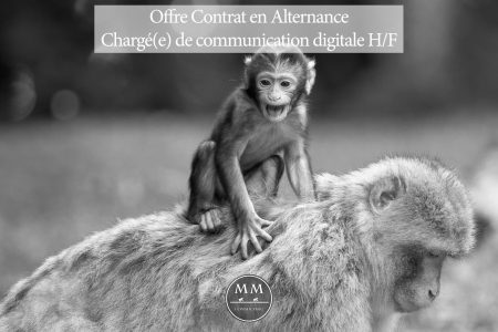 Mad Monkeys recrute: Contrat en Alternance
